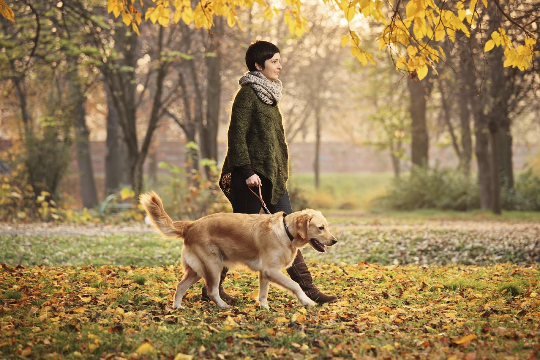 الكلاب الكبيرة تعزز صحتكم والسر هنا