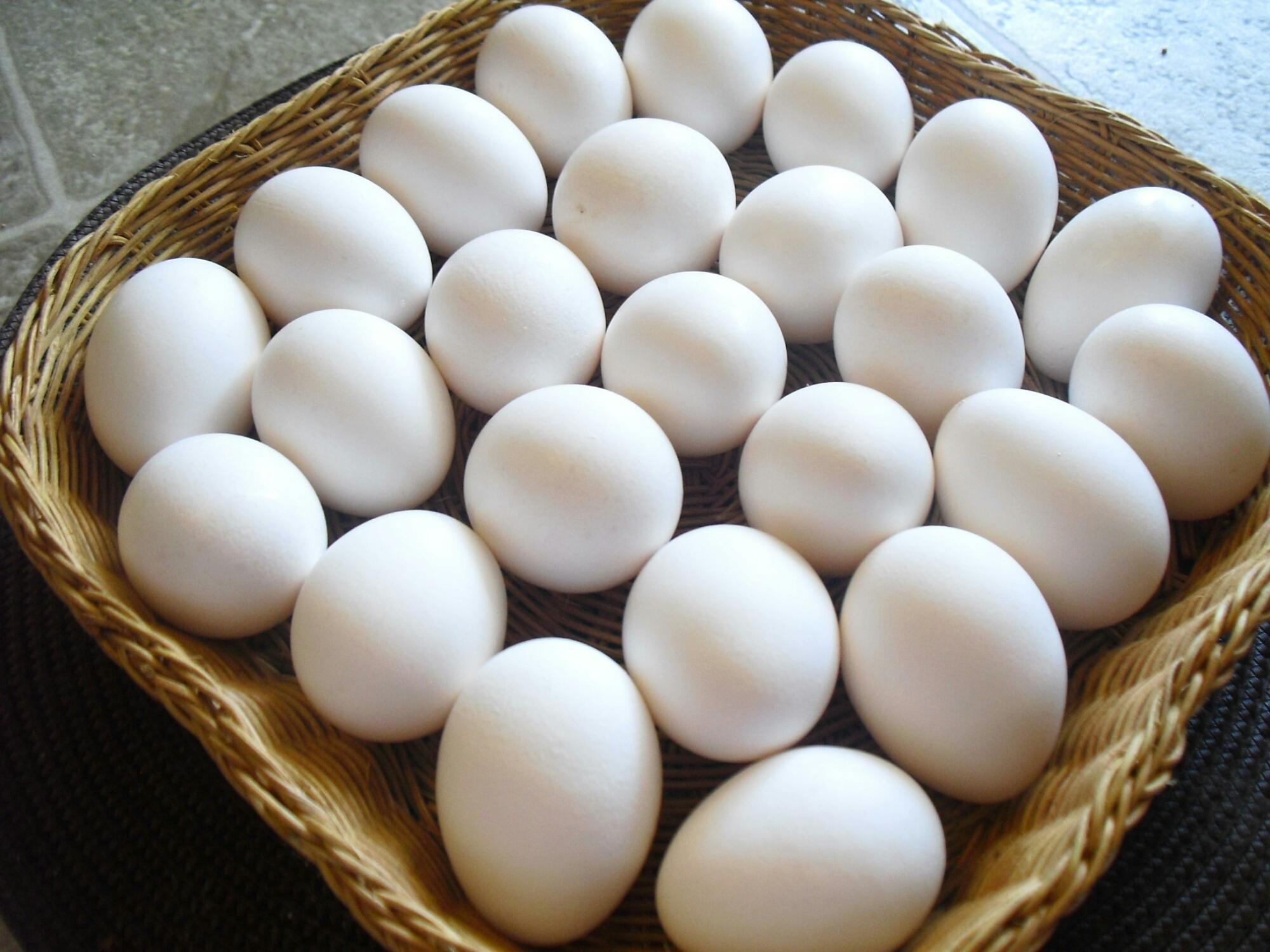 كم طبق في كرتون البيض
