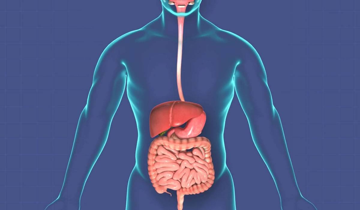 كيفية الحفاظ على الجهاز الهضمي من الامراض